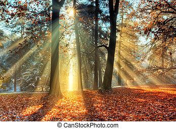 manhã, sunrays, em, tarde, floresta outono