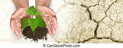 mani, albero, crescente, fesso, presa a terra, terra