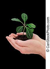 mani, presa a terra, pianta