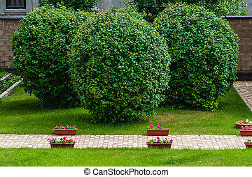 Manicured garden trees - Manicured lawns and trees in a...