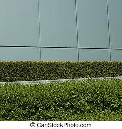 Manicured green hedge