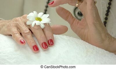 Manicured hands and gentle chrysanthemum. Old woman hands...