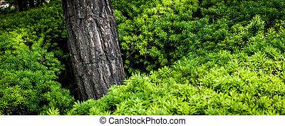 Manicured shrub