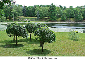 Manicured trees on landscaped property