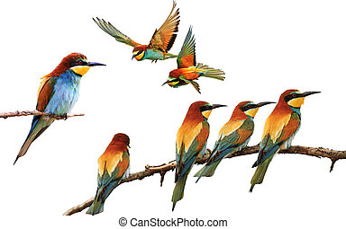 maniertjes, gekleurde, anders, vrijstaand, vogels, set, witte