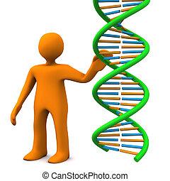 Manikin DNA