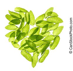 manjericão, hortelã, folhas, forma coração, isolado, branco