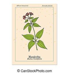 Manjistha Rubia cordifolia , or Indian madder, medicinal ...