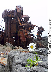 mankind and nature - camomile grown among rusty mechanisms ...