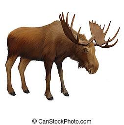 mann, elk., moose., erwachsener