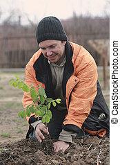 mann, pflanzen, a, setzling