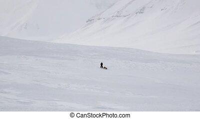 mann, reiten, hund sled, mannschaft, weiß, winterwege, von,...