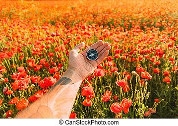 mannelijke , hand, field., klaprozen, kompas