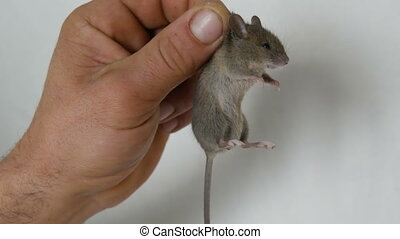 mannelijke , hand houdend, klein huis, muis, gevangenene,...
