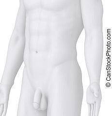 mannelijke , het poseren, illustratie, op wit, hoek,...