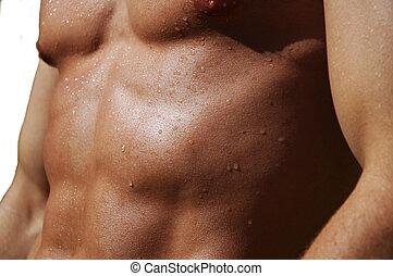 mannelijke , torso