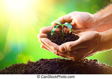 mannens, räcker, plantande, den, plantor, in i, den, smutsa, över, natur, grön, solig, bakgrund