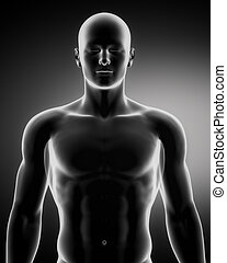 mannetje, in, anatomisch, positie, bovenleer, deel