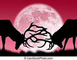 mannetjesdier, vechten, in, de maan