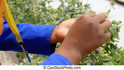 mano, arándanos, tenencia, 4k, trabajador