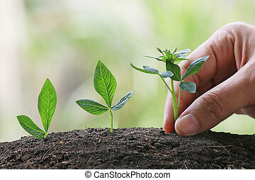mano, con, planta joven, crecer, en, luz del sol