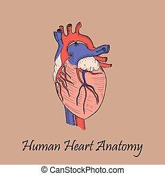 mano, cuore, colorato, umano, disegnato
