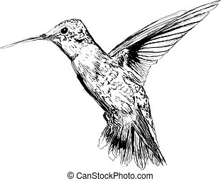 mano, dibujado, colibrí
