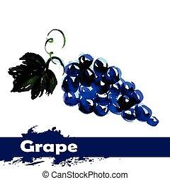 mano, dibujado, pintura de acuarela, blanco, fondo., fruta, uvas