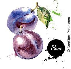 mano, dibujado, pintura de acuarela, fruta, ciruela, blanco,...