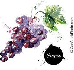 mano, dibujado, pintura de acuarela, uvas, blanco, plano de...