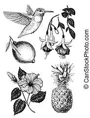 mano, dibujado, tropical, conjunto