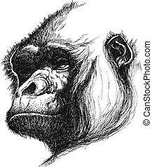 mano, dibujado, vector, eps8, gorila