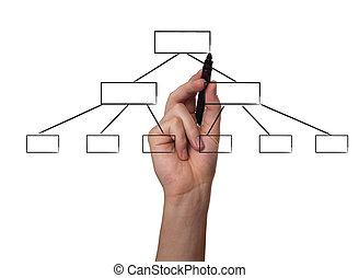 mano, dibujo, un, organigrama, en, un, whiteboard