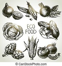 mano, disegnato, schizzo, verdura, set., eco, foods.vector,...