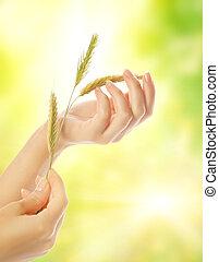 mano donna, con, asciutto, erba