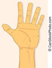 mano izquierda, exposición, cinco, dedos