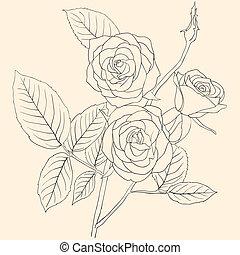 mano, mazzolino, disegno, rose, illustrazione