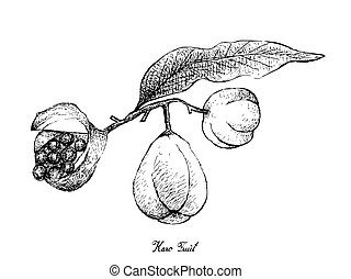mano, plano de fondo, fruits, dibujado, blanco, karo