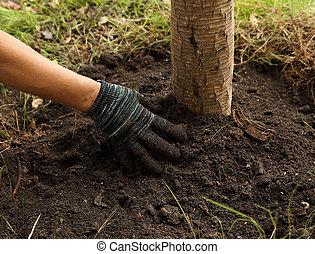 mano, plantado, el, árbol, en, tierra