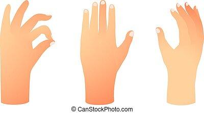 mano, umano, esposizione, signs., set, disegnato, gradients., differente, posizione