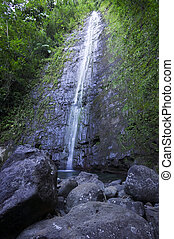 Manoa Falls lies at the end of a forest trail in Honolulu on Oahu in the Hawaiian Islands.