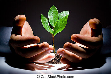 manos, con, planta