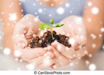 manos, con, verde, brote, y, suelo