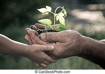 manos, de, hombre anciano, y, bebé, tenencia, un, planta