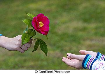 manos, de, niños, dar, flores, como, un, símbolo, de,...