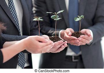 manos, empresa / negocio, brotes, frágil, equipo