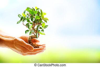 manos humanas, tenencia, planta verde, encima, naturaleza, plano de fondo