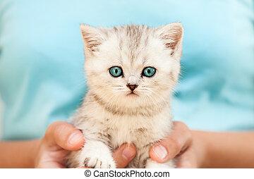 manos humanas, tenencia, poco, gato