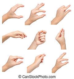 manos, objeto, aislado, hembra, tenencia
