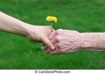 manos, tenencia, joven, senior's